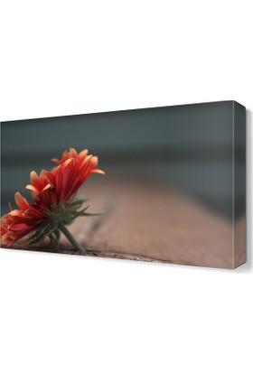 Dekor Sevgisi Kasımpatı Çiçeği Tablosu 45x30 cm