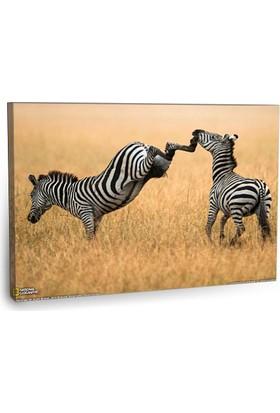 Fotografyabaskı Zebra Tablo 75 Cm X 50 Cm Kanvas Tablo Baskı