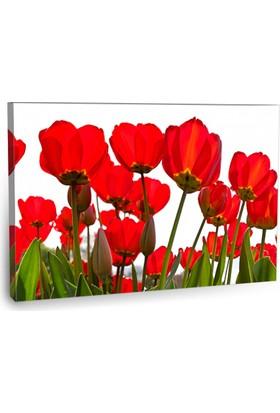 Fotografyabaskı Kırmızı Gelincikler Tablo 75 Cm X 50 Cm Kanvas Tablo Baskı