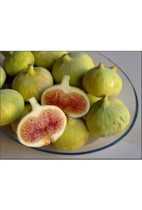 Karadeniz Fidancılık Beyaz İncir Tüplü Aşılı Meyve Fidanı