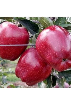 Karadeniz Fidancılık Red Chef Elma Tüplü Aşılı Meyve Fidanı