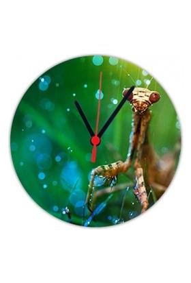 Fotografyabaskı Peygamber Böceği 20 Cm Yuvarlak Hdf Saat Baskı