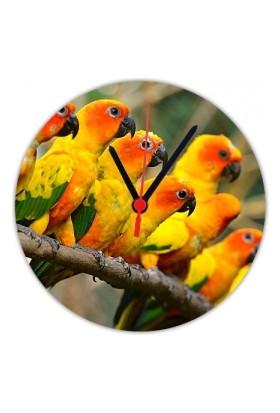 Fotografyabaskı Cennet Papağanları 20 Cm Yuvarlak Hdf Saat Baskı