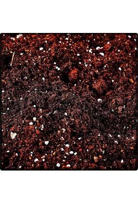 Seyma Çiçekçilik Sukulent Toprağı 5 Litre