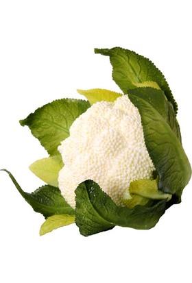 Euro Flora Karnabahar 16X12 Cm