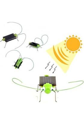 Helen's Güneş Enerjisiyle Çalışan Solar Robot Böcek