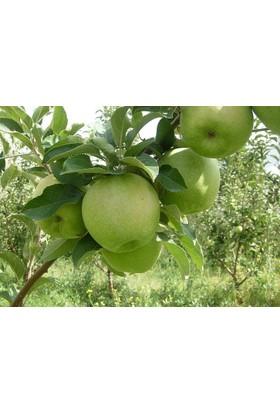 Plantistanbul Elma Fidanı, Ekşi Elma Aşılı, Tüplü, +120Cm