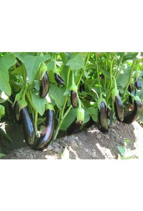Plantistanbul Patlıcan Pala 49 Tohumu Paket 10 Gr.