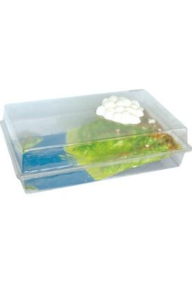 Su Döngüsü Modeli