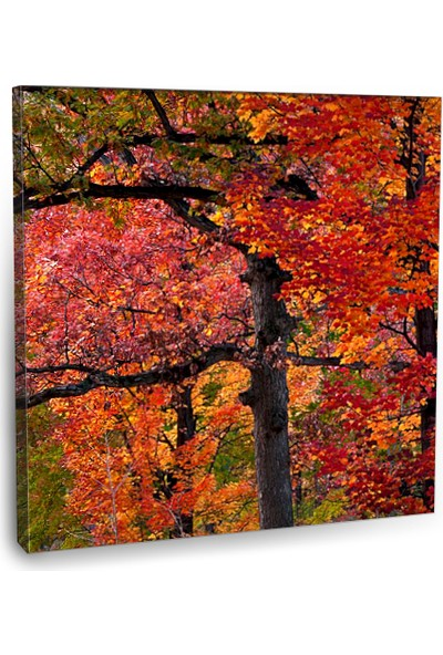 Fotografyabaskı Sonbahar Ağaçları Tablo 70 Cm X 70 Cm Kanvas Tablo Baskı