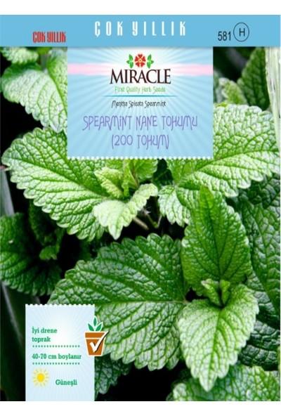 Miracle Spearmint Nane Tohumu (200 tohum)