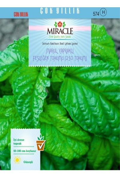 Miracle Marul Yapraklı Fesleğen Tohumu (250 tohum)