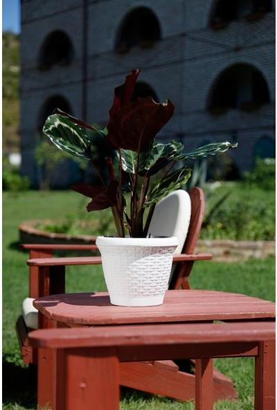 Mini Garden Hasır Saksı 3,3 LT Beyaz