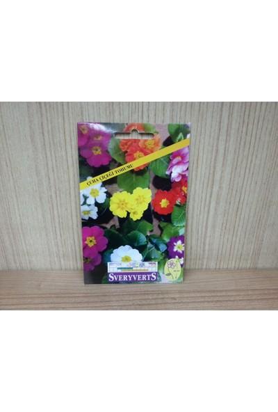 Sveryverts Çuha Çiçeği Tohumu Paket