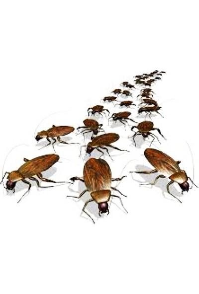 Chrysamed Kaloriferböceği Jeli Fibron Jel 5 Gr