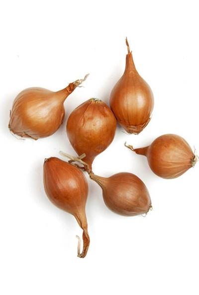 Cıty Farm Organik Arpacık Soğan