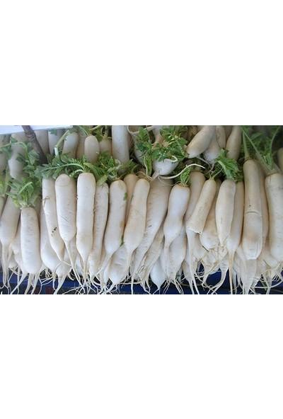 Plantistanbul Turp Uzun Beyaz Japon Turp Tohumu Paket 25 Gr.