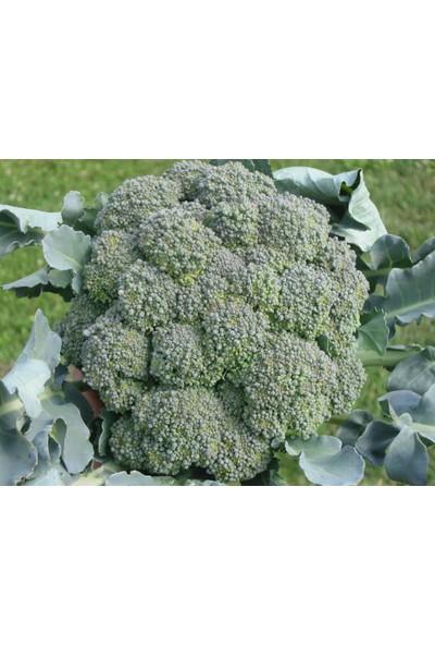 Plantistanbul Brokoli Monet Tohumu Paket 5 Gr.