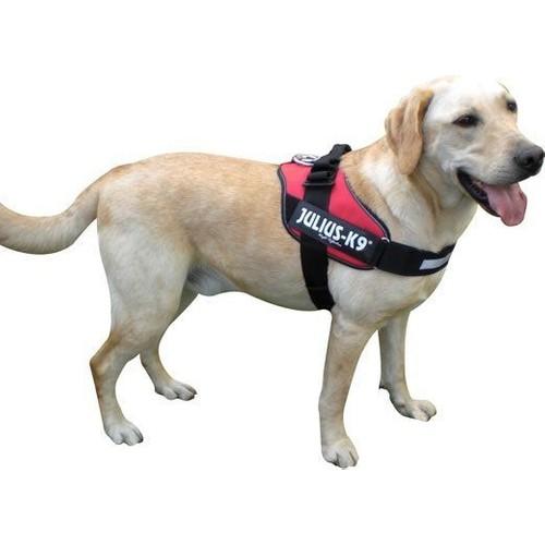 Julius-K9 Extra Sağlam Özel Köpek Göğüs Tasması (L) 66-85 Cm Kırmızı