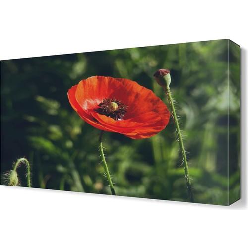Dekor Sevgisi Gelincik Tablosu 45x30 cm
