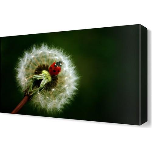 Dekor Sevgisi Uğur Böceği2 Canvas Tablo 45x30 cm