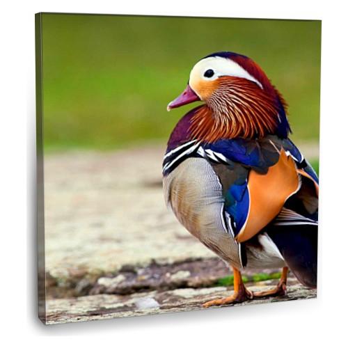 Fotografyabaskı Mandarin Ördeği Tablosu 70 Cm X 70 Cm Kanvas Tablo Baskı