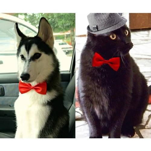 Pratik Kedi Köpek Papyonu