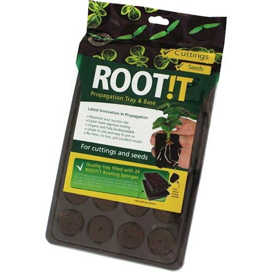 Root!T Viyol - 24 Adet