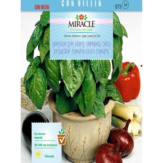 Miracle Saksılık Çok Geniş Yapraklı Tatlı Fesleğen Tohumu(250 tohum)