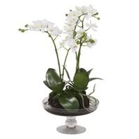 Altıncı Cadde Cam Saksılı Beyaz Orkide 52 Cm