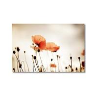 Tictac Kırmızı Gelincik Kanvas Tablo - 40X60 Cm
