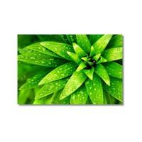 Tictac Yeşil Yapraklar Kanvas Tablo - 40X60 Cm