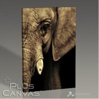 Pluscanvas - Elephant Tablo