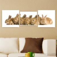 Dekoriza Sevimli Tavşanlar 3 Parçalı Kanvas Tablo 155X50cm