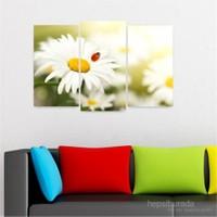 Dekoriza Uğur Böceği & Beyaz Papatya 3 Parçalı Kanvas Tablo 80X50cm
