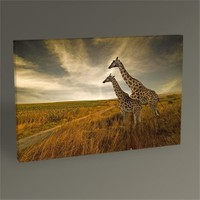 Tablo 360 Giraffes Tablo 45X30