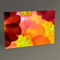 Tablo 360 Primula Flower Iı Tablo 45X30