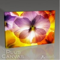 Pluscanvas - Flower Vıı Tablo