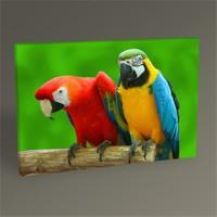 Tablo 360 Papağanlar Tablo 45X30
