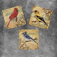 Oscar Stone Sarı Mavi Kuş Magnet