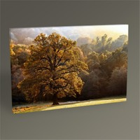 Tablo 360 Beautiful Tree Tablo 45X30