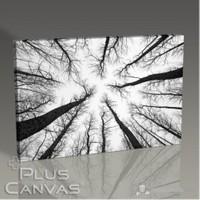 Pluscanvas - Long Trees Tablo
