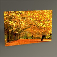 Tablo 360 Fall İn A Park Tablo 45X30