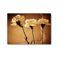 Tictac Beyaz Menekşeler 1 Kanvas Tablo - 40X60 Cm