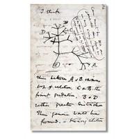 Tictac Evrim Ağacı Kanvas Tablo - 40X80 Cm
