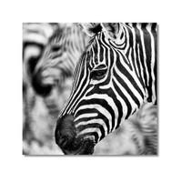 Tictac Zebra 2 Kanvas Tablo - 50X50 Cm