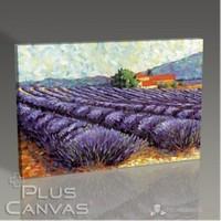 Pluscanvas - Lavender Fields Tablo