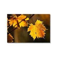 Tictac Sarı Yapraklar 2 Kanvas Tablo - 60X90 Cm