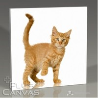 Pluscanvas - Tawny Cat Tablo