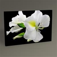 Tablo 360 Beyaz Çiçekler Tablo 45X30